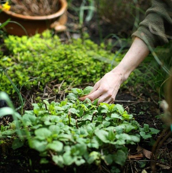 Грибы выращивание для себя и на продажу 86