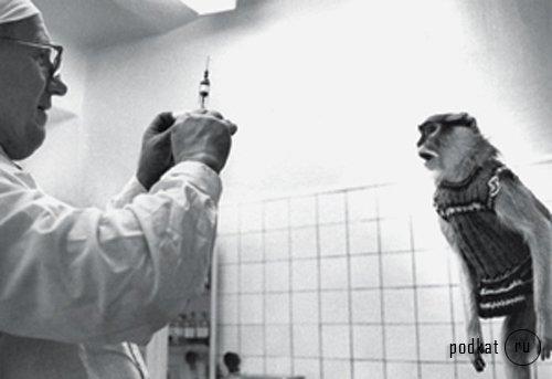 вакцина - обезьянам