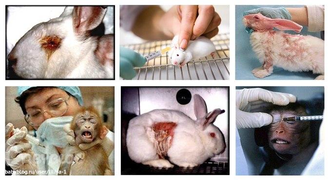 Заборона тестування косметики на тваринах: МОЗ виніс на повторне громадське обговорення проєкт постанови - Цензор.НЕТ 3841