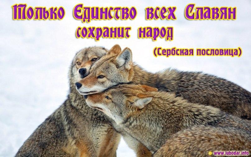единство всех славян